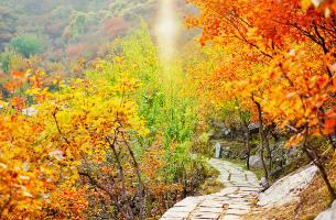 长江三峡胜景单程三日游