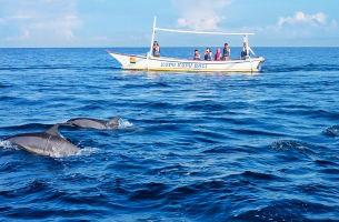 【罗威纳追海豚+0购物】巴厘岛双飞7日游