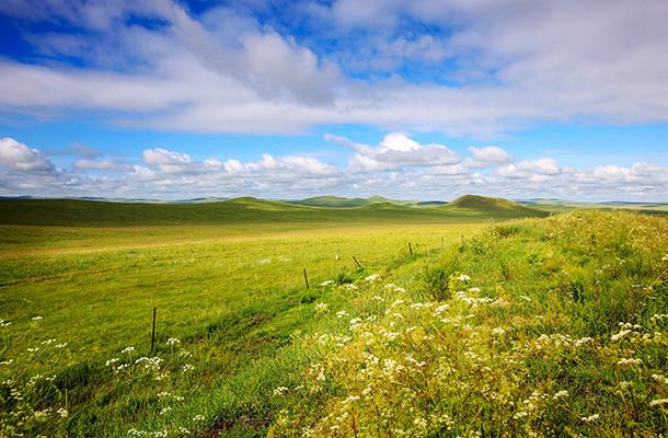 【草原盛宴】哈尔滨、齐齐哈尔扎龙、额尔古纳、黑山头马场、呼伦贝尔草原双飞7日游
