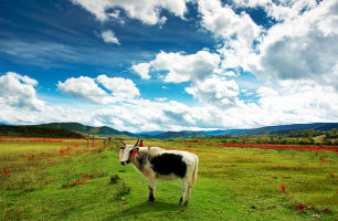 【从你的全世界路过】丽江、香格里拉、稻城亚丁、俄亚纳西古寨、泸沽湖双飞7日游