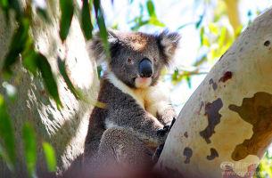 【海陆空?雨林天礁&多彩香槟池】澳大利亚、墨尔本、新西兰、大堡礁13日游