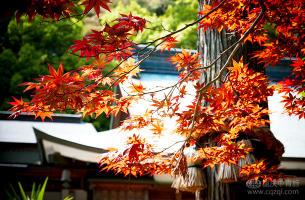 【赏枫泡汤】日本本州东京、京都、奈良、富士山双飞6日游(阪东)