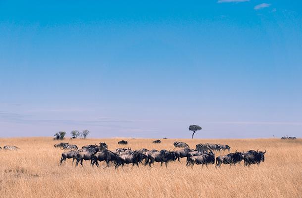 肯尼亚、坦桑尼亚、埃塞俄比亚、纳米比亚、博茨瓦纳、赞比亚、津巴布韦7国24日游