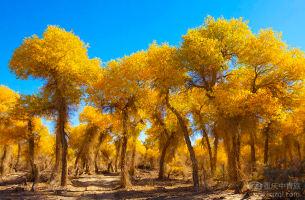 【南疆环游】新疆库尔勒、胡杨林公园、天山大峡谷、罗布人村寨双飞13日游