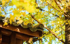又是一年秋意浓,云南这些地方的秋色美得正当时。