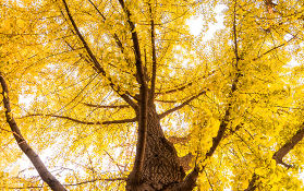 秋日的贵州,有你看不完的秋景,醉美数深秋!