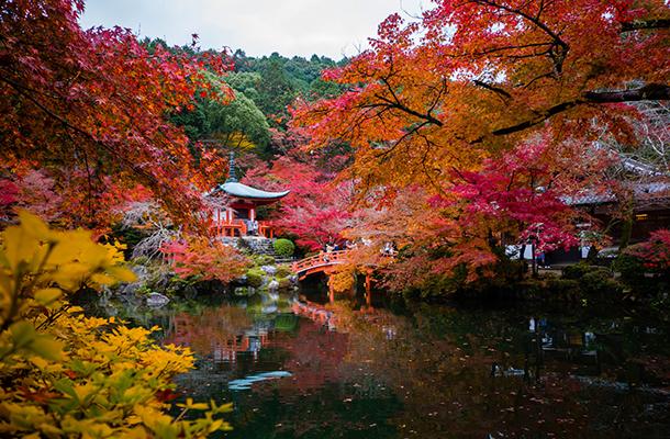 日本東京、富士山、大阪、京都、奈良、鐮倉雙飛6日游