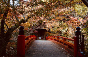 【红叶祭】日本东京、大阪、京都、奈良双飞6日游