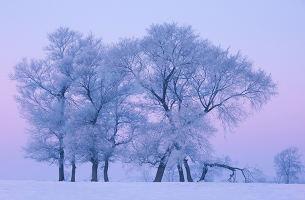 吉林雾凇、万科滑雪、长白山、镜泊湖、魔界、雪乡、哈尔滨双飞6日游